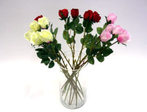 Kasvit ja kukat